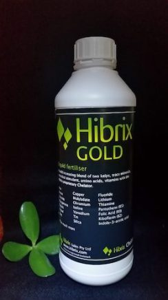 Hibrix-1ltr-indoors-with-money-tree-prop